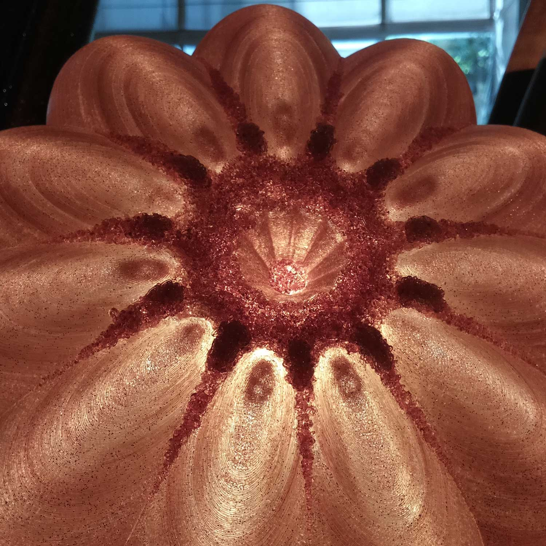 astrophyttum-desert-light-by-serena-fanara-dettaglio-alto
